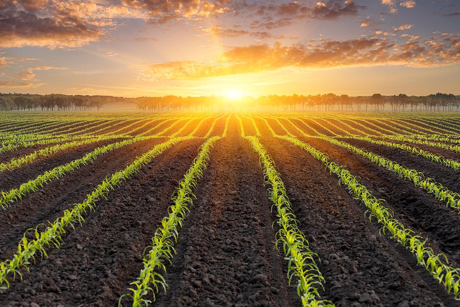 Programa para el Uso Responsable de Agroquímicos (PURA)