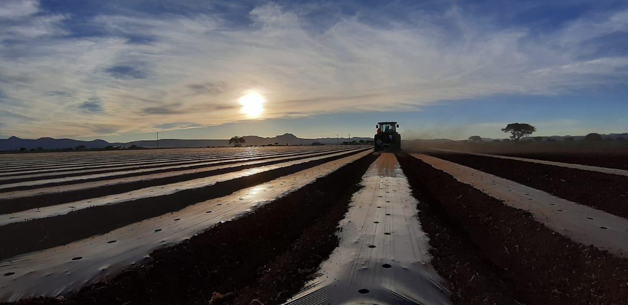 El impacto de los ácaros en la producción agrícola y su control