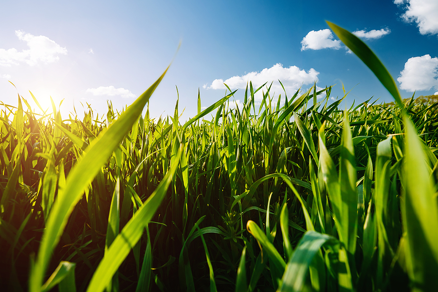 Herbicidas Pre-emergentes: Conoce DIMET ÍMPETOR